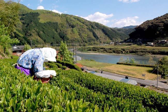 5/1-2 自然の学校〜お茶の学校〜